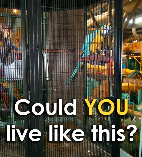 Bird Trapped in Indoor Water Park — Please Help!