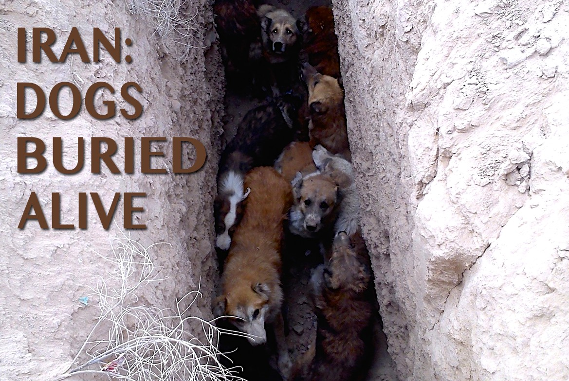 Iran: Dog's Brutalised and Buried Alive