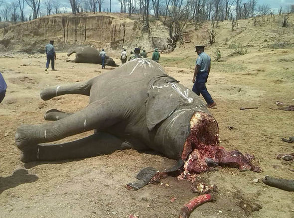 ***Breaking*** Journalists arrested for exposing Zimbabwe  police commissioner and a junior officer for BEHEADING ELEPHANTS AT Hwange national park