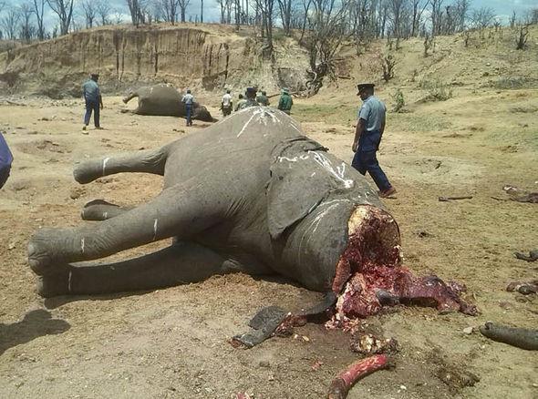 elephants4-381370