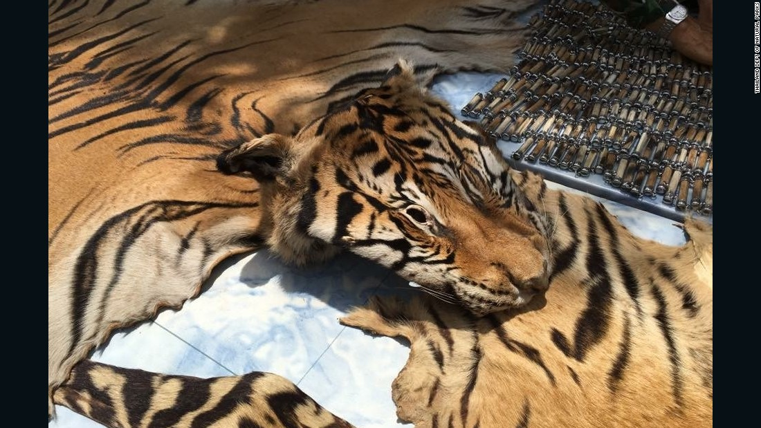 160602095244-03-thailand-tiger-temple-faces-criminal-complaint-0602-super-169