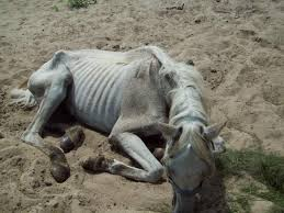 UPDATE ON HORSES BEING TORTURED BY THE HAVASUPAI TRIBE MONSTERS