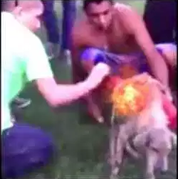 Honduran Monsters Tied Explosives to a Street Dog and Lit the Fuse