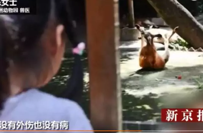 Monsterous Zoo Allows Visitors To Torture its Animals